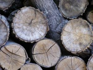Twardość i miękkość drewna