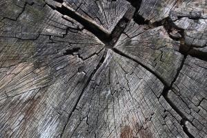 Właściwości drewna mahoniowego