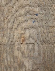 Najpopularniejsze rodzaje drewna